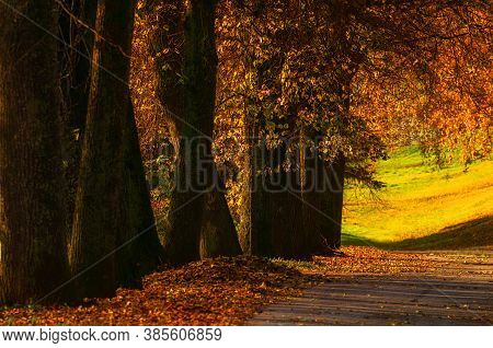 Fall landscape. Fall trees with golden foliage in the fall city October park, sunny fall nature scene. Glow effect applied. Fall park landscape, colourful fall nature