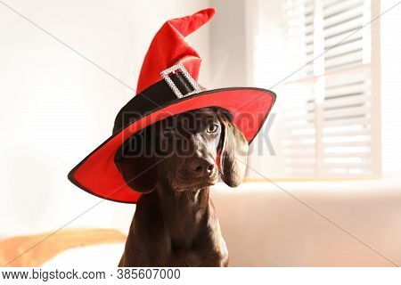 Adorable German Shorthaired Pointer Dog In Witch Hat Indoors. Halloween Costume For Pet