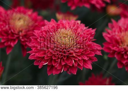 Red Flower Beautiful Stock Photo For Pc