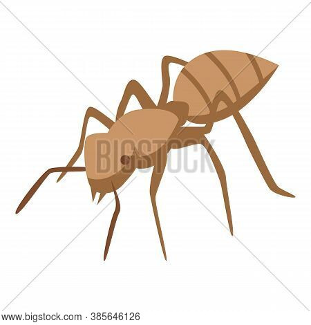 Tropical Ant Icon. Isometric Of Tropical Ant Vector Icon For Web Design Isolated On White Background