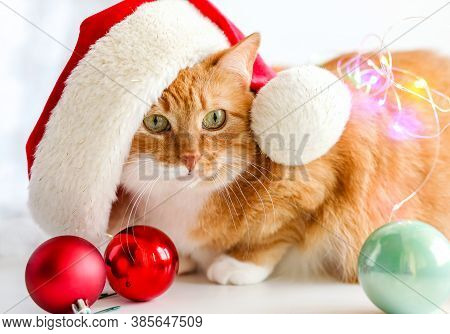 A Red Cat Sits In A Red Santa Hat On A White Background With Christmas Toys Red Balloons And Bokeh L