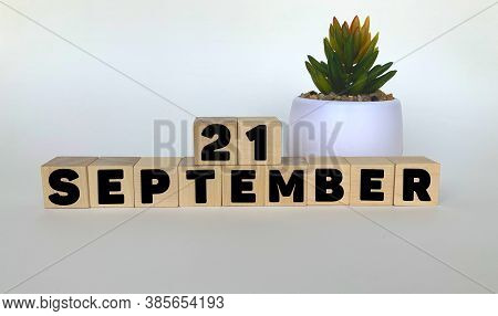 21 September .september 21 On Wooden Cubes On A White Background.pot With A Flower .calendar For Sep