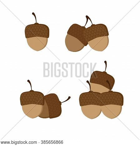 Isolated Brown Acorns On White Background. Flat Vector Illustration