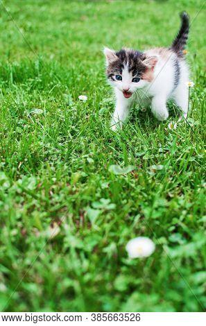 Funny Little Cat Walking Outdoors