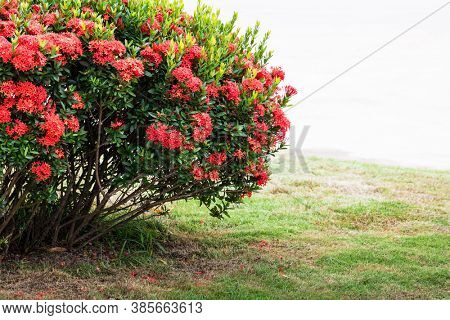 bush with red flowers in the park