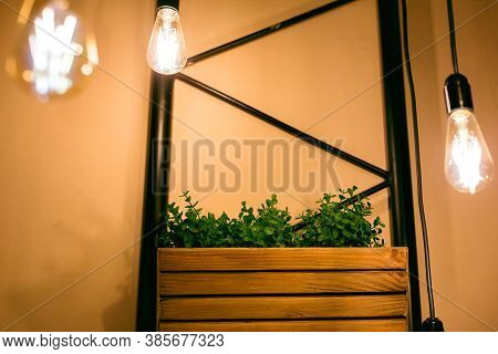Pendant Edison Bulbs In A Cafe With Wooden Pots With Green Plants, Eco Friendly Interior Style Elect