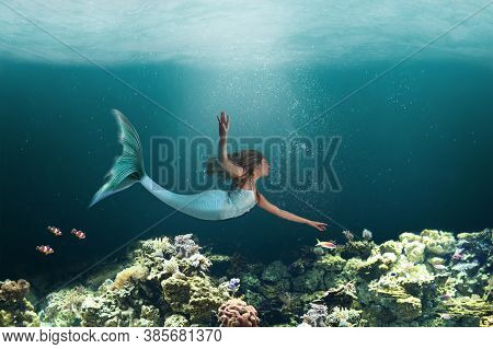 Mermaid With Long Tail Swimming Under The Waters Of The Ocean Coral Reefs.