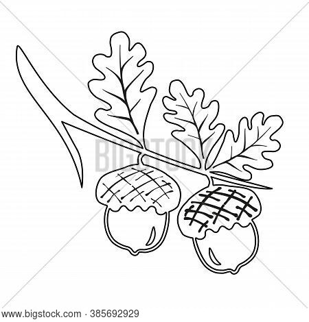 Line Oak Branches With Leaves And Acorns Outline, Silhouettes On White Background. Line Oak Lives Ac