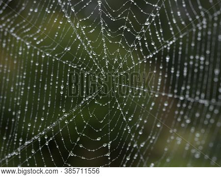 Closeup Of The Spider Web Or Cob Web, Cobweb Covered With Dew Drops