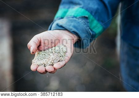Male Hands Hold A Handful Of Seeds For Sowing, Close-up, Selective Focus