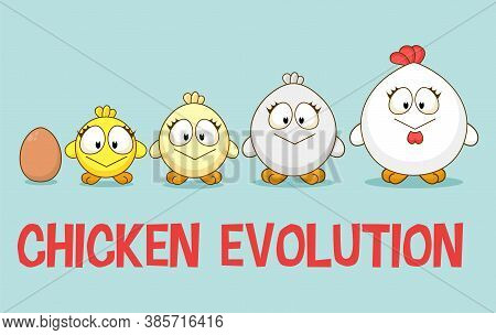 Cute Little Chicken In Different Ages Growth Stages. Cultivation Of Chicken Cartoon Concept. Rooster