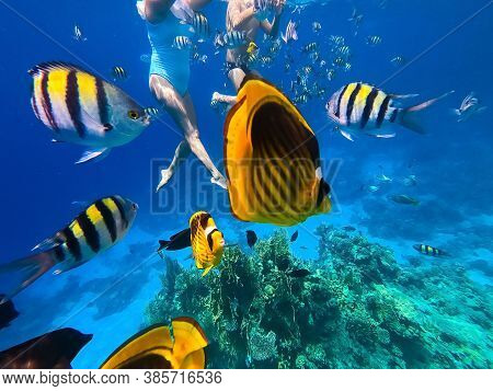 Underwater Colorful Tropical Fishes At Coral Reef At Red Sea. Blue Water In Ras Muhammad National Pa