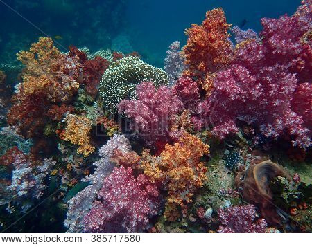 Colorful Coral Reef At Lipe Island, Andaman Sea, Indian Ocean, Thailand, Nature Photography