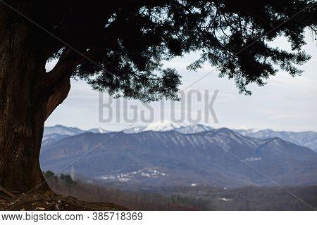 Beautiful Sprawling Wood And Mountain Panorama In Late Autumn Or Winter