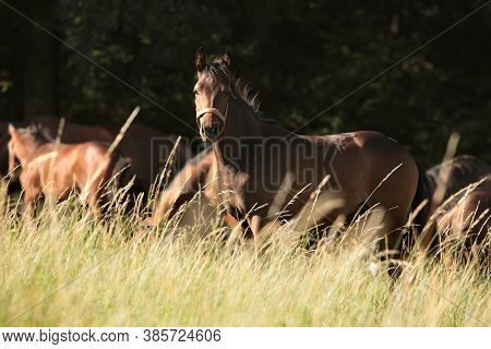 Horse colt foal sunrise sunset Nature background Nature landscape Nature background farm horses trees Nature background. Nature background meadow field pastrure Nature background mammal dusk dawn Nature background stallion mare Nature background.