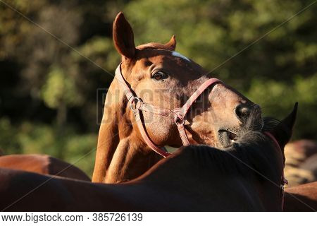 Horse head colt foal sunrise sunset Nature background Nature landscape Nature background farm horses trees Nature background. Nature background meadow field pastrure Nature background mammal dusk Nature background stallion mare Nature background.