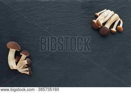 Mushrooms, Honey Agarics On A Black Background
