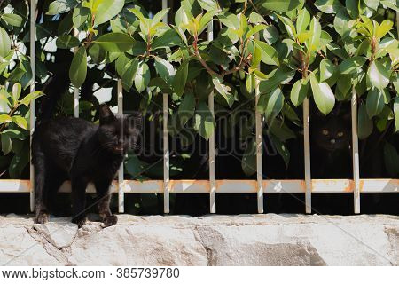 Small Black Kitten Standing On The Fence With Its Eyes Closed, Meowing At The Camera Man , Wanting T