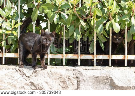 Small Black Kitten Standing On The Fence With Its Eyes Half Closed, Meowing At The Camera Man , Want