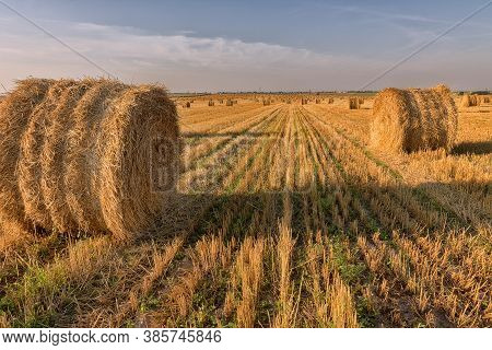 Hay Bale. Agriculture Field With Sky. Rural Nature In The Farm Land. Straw On The Meadow. Wheat Yell