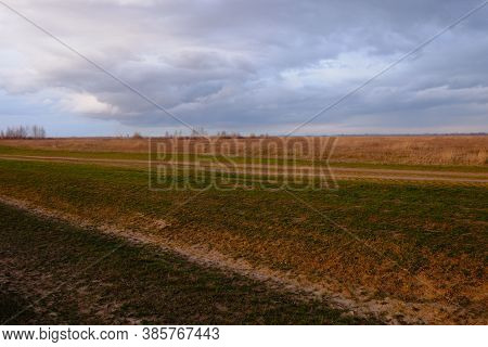Yellowed Herbs In The Field In The Evening. Cloudy Sky Over The Field. Evening Landscape.