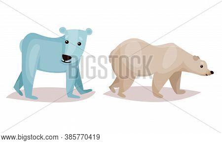Polar Bear As Carnivore Mammal Isolated On White Background Vector Set