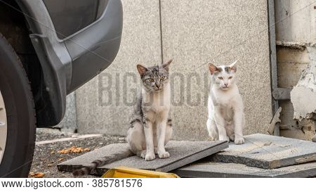 cautiously stray cat family in a city