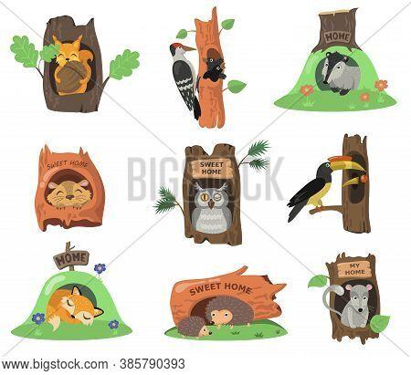 Forest Animals In Hollows Flat Illustration Set. Cartoon Squirrel, Fox, Owl Or Bird In Oak Tree Hole