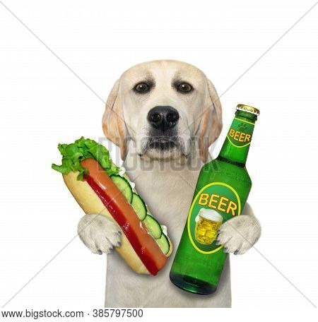 A Dog Is Eating A Hot Dog And Drinking Beer From A Bottle. White Background. Isolated.