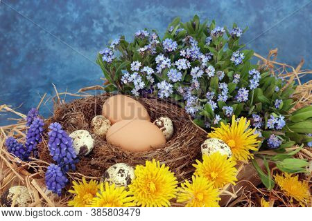 Spring season abstract composition with brown & quail eggs in natural nest with forget me nots, grape hyacinths & dandelion flowers. On mottled blue background.