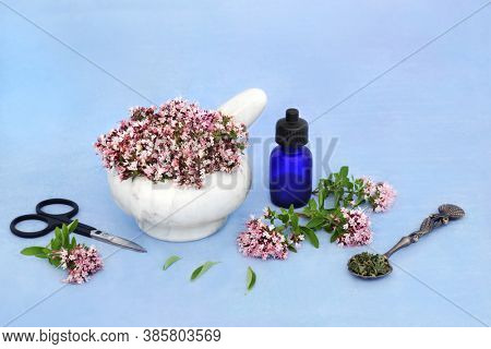Oregano herb flowers in a mortar with pestle with essential oil bottle & dried leaves. Used in natural herbal medicine to ease IBS symptoms, is anti bacterial, anti inflammatory & is an anti coagulant