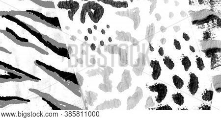 Animal Print Clothing. Grey Safari Vintage. Gray Animal Print Rapport. Leopard Pattern. Cute Tiger I