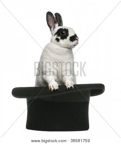 Dalmatian Rabbit standing in magician's top hat, against white background