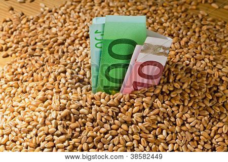 grains of wheat. yields for corn in agriculture