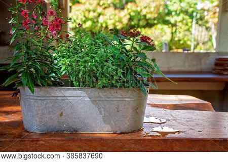 A Metal Tub Filled With Colorful Flowers Sitting On A Ledge Near A Window