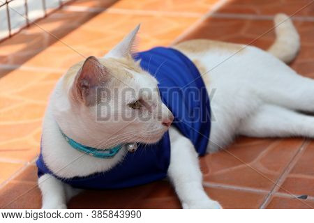 Cat Wears Blue Shirt Of Japan National Football Team Laying Down On The Brown Background.
