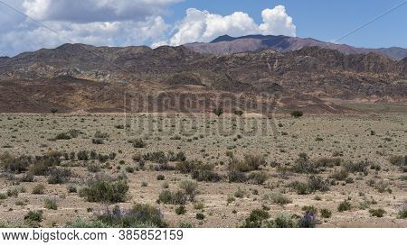 Dry Steppe Landscape In Ottuk, Kyrgyzstan, With Three Trees And Red Mountains.