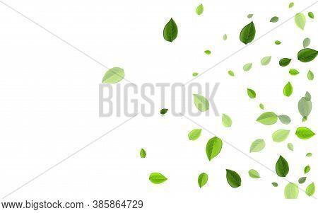 Lime Leaf Transparent Vector Wallpaper. Falling Leaves Brochure. Green Greens Motion Branch. Foliage
