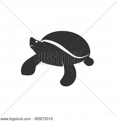 Smart Turtle Logo Mascot Illustration Animal Nerd Knowledge Genius Learning Study Sea Ocean Reptile
