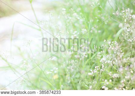 Soft Blur Nature Background