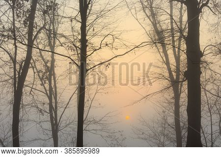 In The Morning, The Sun Through The Fog Creates Unusual And Beautiful Effects Of Color And Light