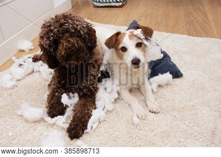 Dogs Obedience Concept. Two Puppies Destroyed A Pillow.