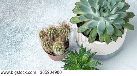 Haworthia, Echeveria, Cactus In Different Pots On Stone Table Indoor. Plant Transplantation. Concept