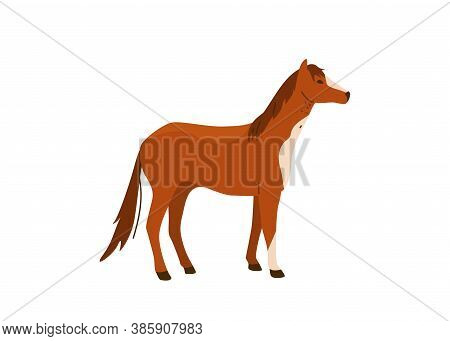 Brown Horse Stand Vector Illustration. Isolated On White Background. Mare Equine In Simple Cartoon F