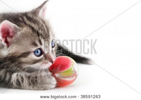 Kitten plays with ball