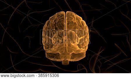 Orange Brain. Abstract Digital Human Brain. Neural Network. Iq Testing, Artificial Intelligence Virt