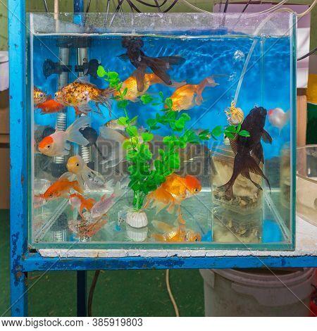 Many Various Fish In Aquarium Pet Shop