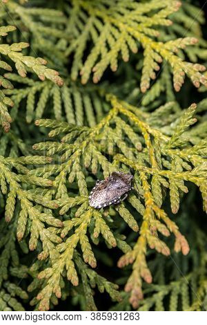 Little Black Beetle On A Green Tree In The Garden