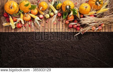 Harvested Autumn Harvest on a Wooden Background. Top View