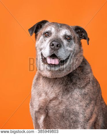 studio shot of a dog on an isolated background